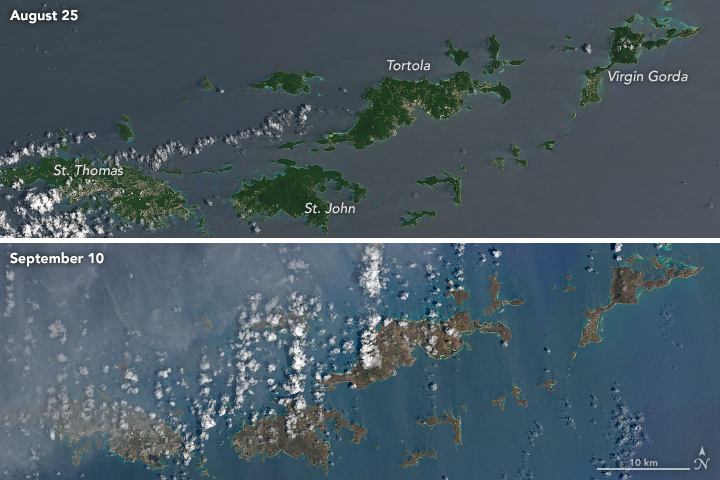 Before and after satellite images of the U.S. Virgin Islands demonstrating the damage done to its foliage. Source: Wikimedia