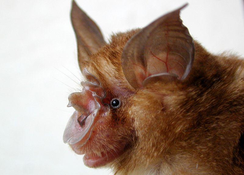 Bats could be found at some wildlife markets